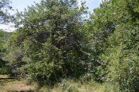Pozemek na prodej, Uherské Hradiště / Míkovice