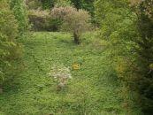 Zahrada na prodej, Zlaté Hory / Horní Údolí