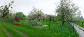 Zahrada na prodej, Český Těšín