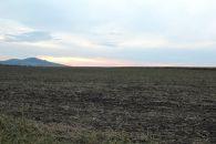 Zemědělský pozemek na prodej, Starovičky