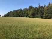 Zemědělský pozemek na prodej, Ostrava / Svinov