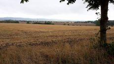 Zemědělský pozemek na prodej, Tršice / Hostkovice