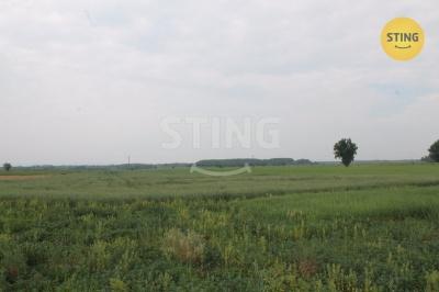 Zemědělský pozemek, Šanov - fotografie č. 1